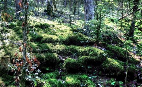Moss and Lichen, BRT, below Ponca