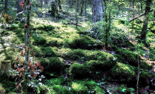 Moss and Lichen, BRT, below Ponca