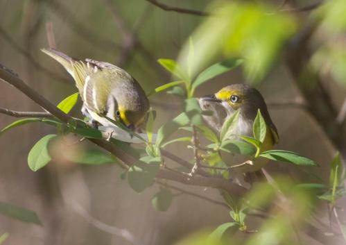 Nest building together